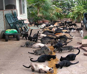 island overrun by cats