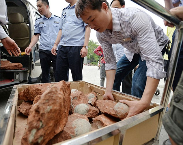 43 Fossilized Dinosaur Eggs Found In China (PHOTO)