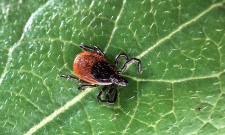 Powassan virus:  What You Need To Know About Deadly Tick Borne