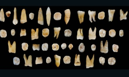 Ancient teeth found in China: Discovery Could change human history