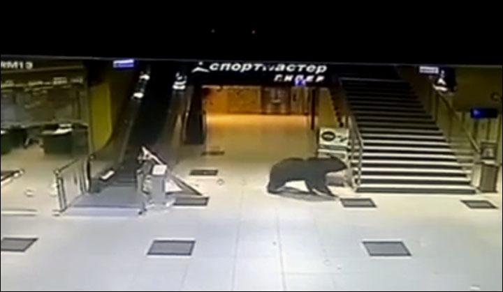 Bear Russian mall 2