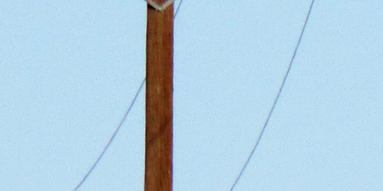 mountain lion climbs telephone pole (PHOTO)
