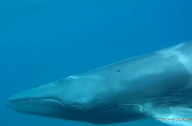 Omura's whale filmed For The First Time Ever VIDEO