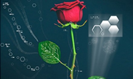 Cyborg rose:  Rose Has electric circuits running through it