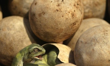 Dinosaur nesting examined in new study