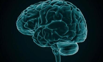 Male and female brain are identical: Study