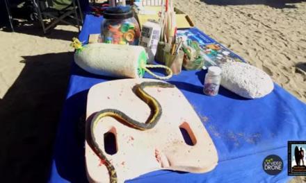 Rare sea serpent washes ashore on Huntington Beach (PHOTO)