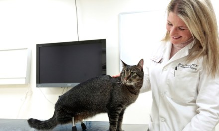 Vincent the cat had 3D Printed Legs (VIDEO)