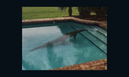 Florida Keys: Crocodile Found Swimming In Pool (PHOTO)