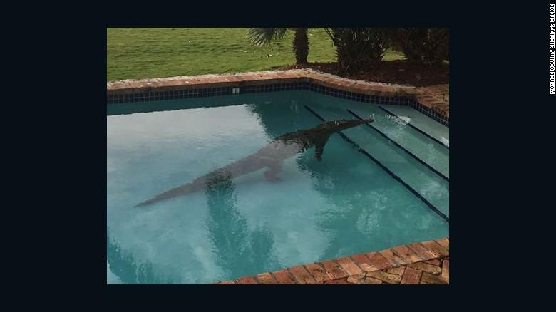 Florida Keys crocodile found taking a dip in mans pool