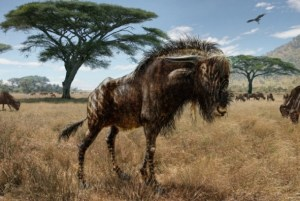 An illustration of the Late Pleistocene beast Rusingoryx atopocranion, which curiously has the same type of hollow-dome crest as the duck-billed dinosaur. Credit: Todd S. Marshall | http://www.marshalls-art.com