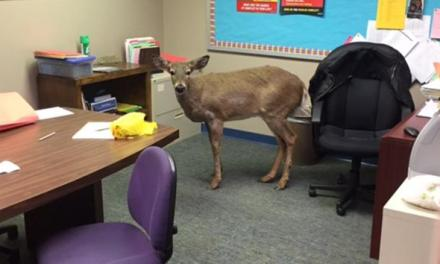 deer jumps through school Windows in New Jersey (photo)