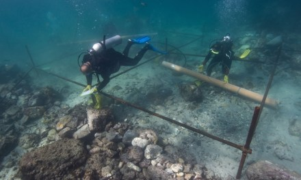 Vasco da Gama shipwreck Found With Rare Coin (PHOTO)