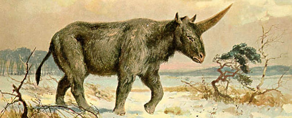 siberian unicorn discovery Details When 'Siberian hunicorn' last lived on Earth (PHOTO)