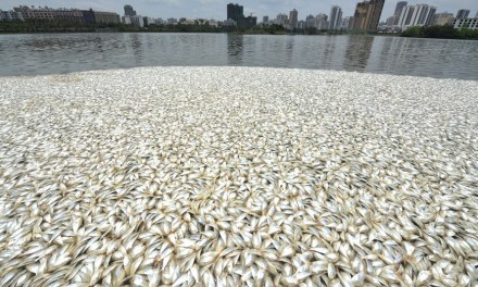 35 Tons Of Dead Fish Appear In China UPDATE