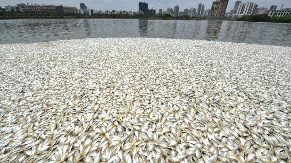 China dead fish