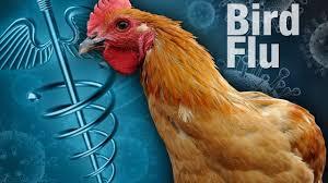 Missouri bird flu outbreak