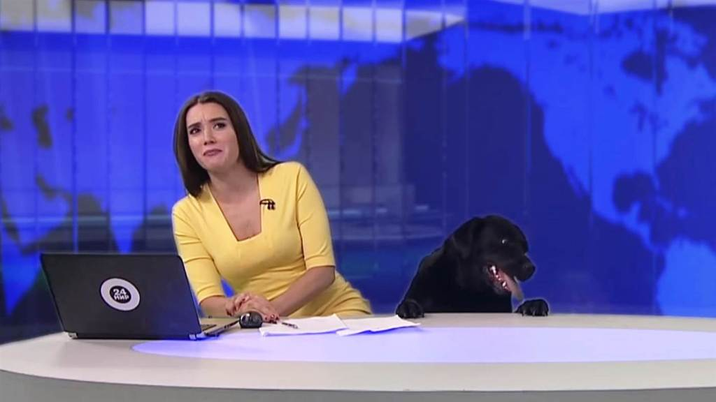Dog interrupts Russian news broadcast