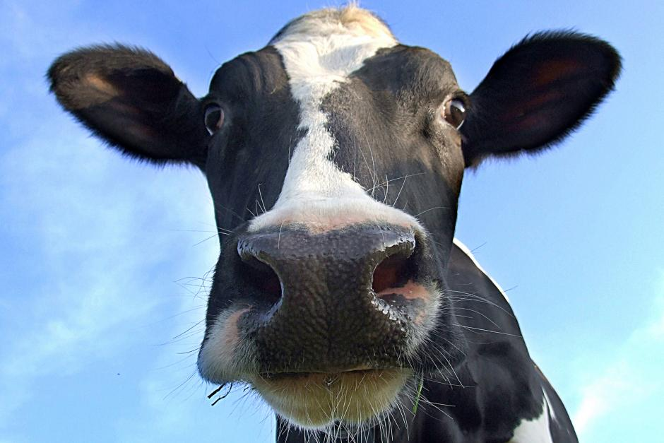 Moo Means No — Taliban Members Caught Having Sex With