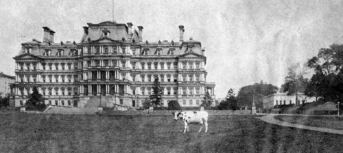 Pauline Wayne, President Taft's Holstein cow, was the last to live at the White House (From the Historical Society's collections, CHS 00861)
