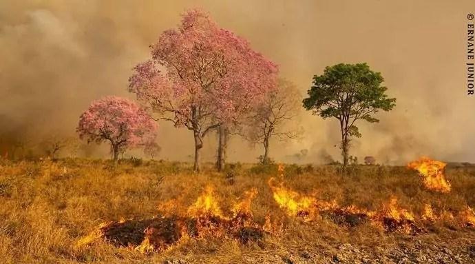 15 imagens do Pantanal para entender a situação causada pelas queimadas