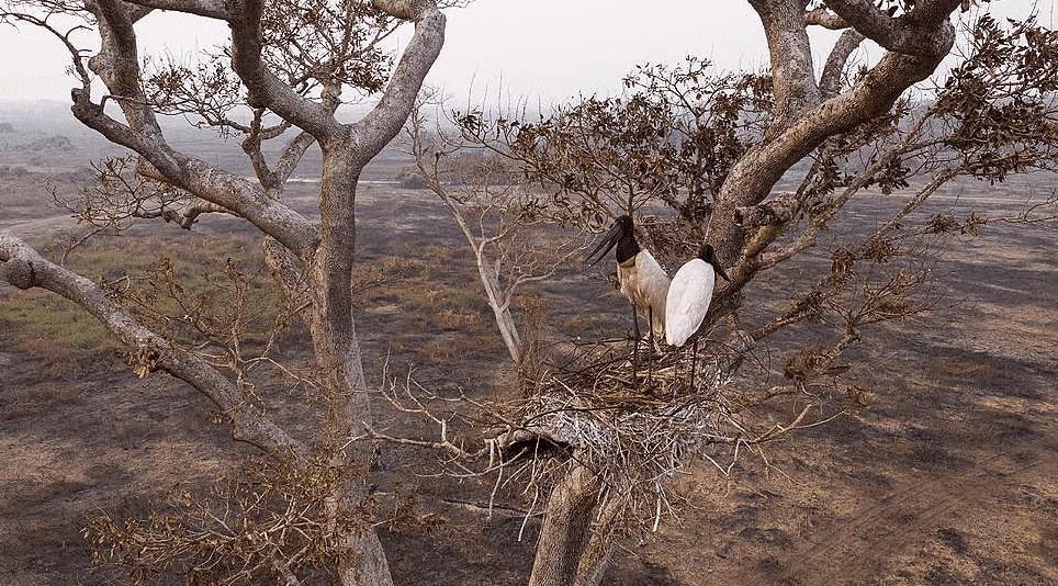 Pantanal e tuiuiús