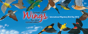 International Migratory Bird Day 2016