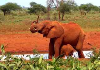 Safarietour Kenia