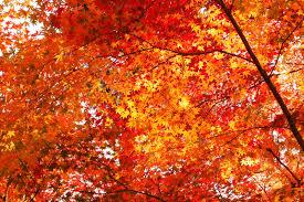 Podzimní prázdiny 26.-29.10.2017