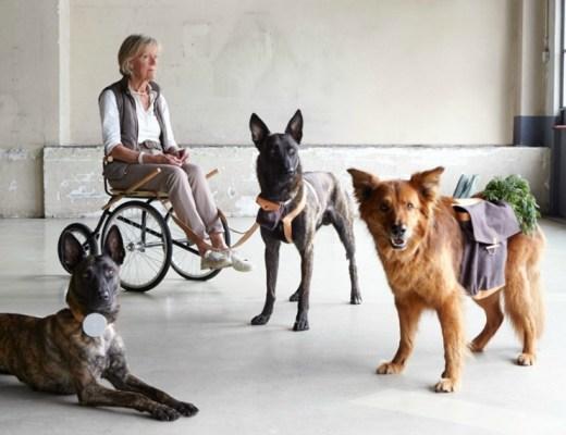 Dutch Design Week. De hond als Man's Best Friend