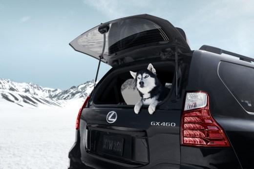 Lexus GX Black Line 2022 exterior