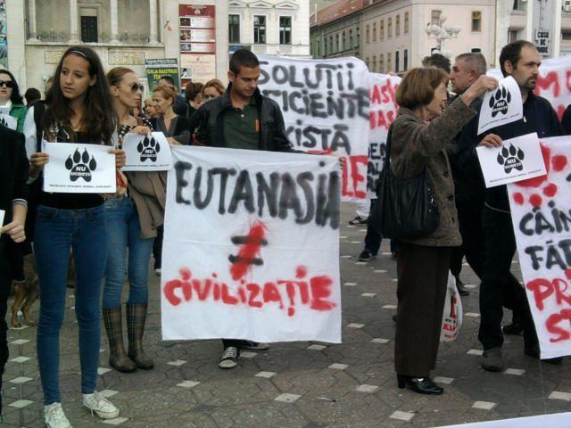 protest ciini17