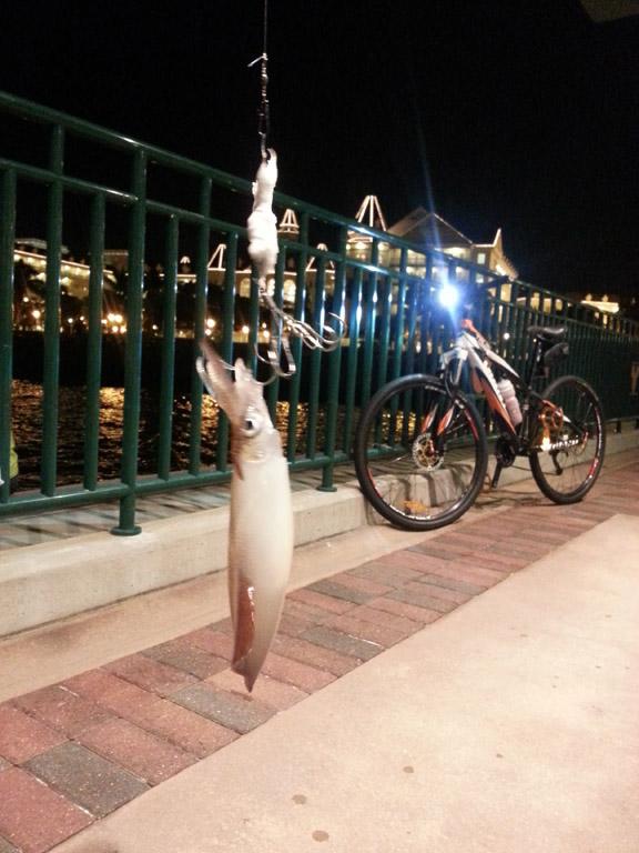 問人借了大魷魚影相