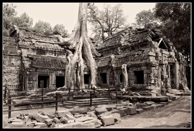 纏繞著塔普倫寺的Kapok 蛇樹
