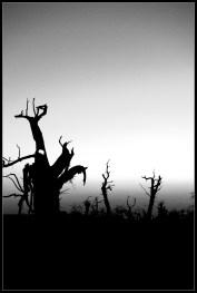 歷盡滄桑的胡楊樹