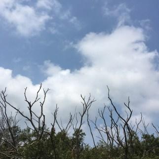穿梭禾秧石林