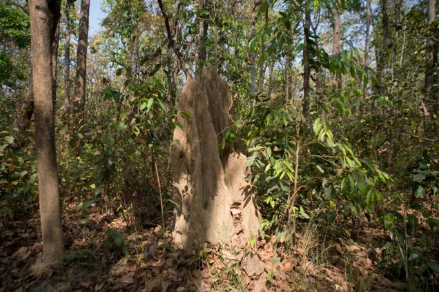 A lot of termite caves along the path