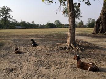 Bardia National Park [A walk into Tharu Village]