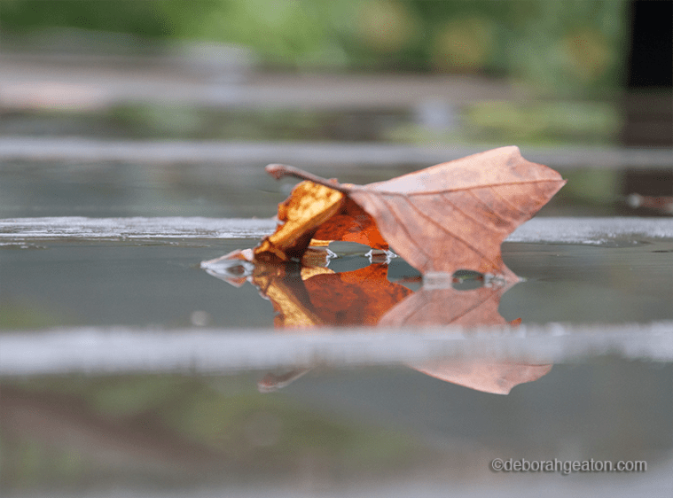 leaf-in-water
