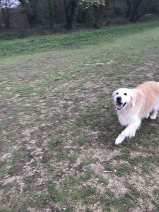 Flossie running free