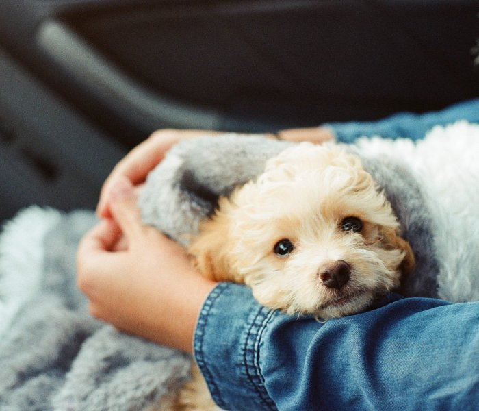 Dogs: They Never Ghost Us or Abandon Us
