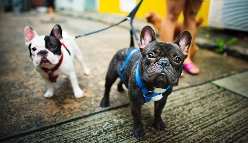 Side Hustle Walking Dogs