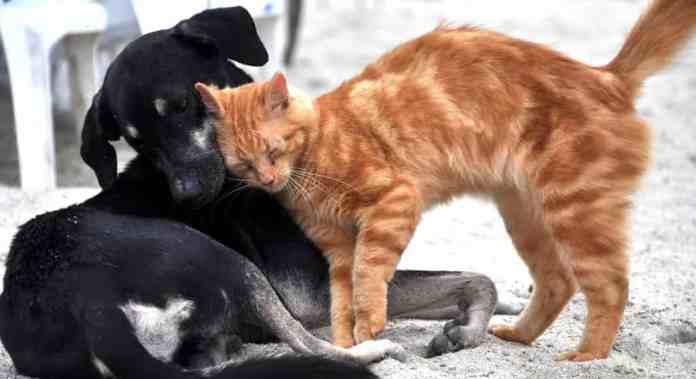 adoptar perro teniendo gato