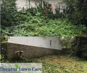 Decatur Lawn Care Ivy Clean Up Job