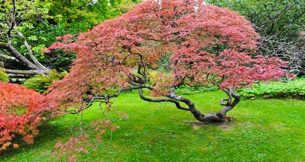 les 8 plantes fetiches d un jardin zen