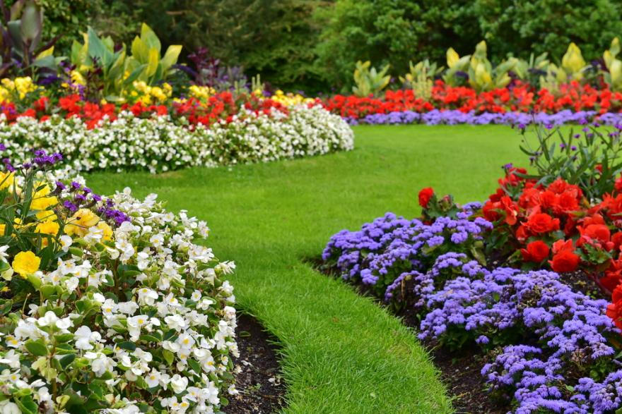 un jardin fleuri