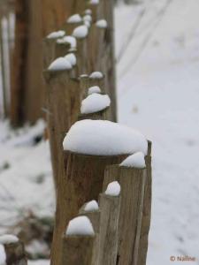 Piquets sous la neige BLOG NALINE 2
