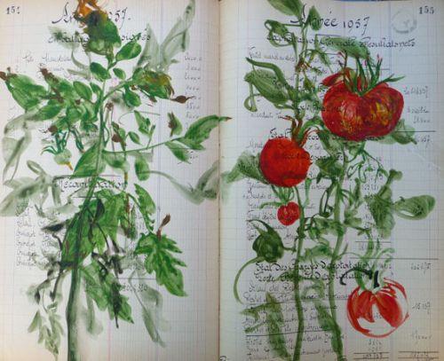 GROSEIL 2012 Tomates