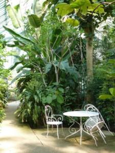 2016-06 Serres-d-Auteuil_palmarium_salon-jardin-1900