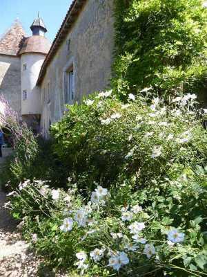 2017-08_Poitou_prieure_Laverre_Aslonnes_jardin_anemones-du-Japon